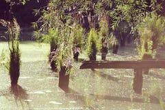 Lac en été Images libres de droits