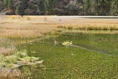 Lac en bambou arrow, Jiuzhaigou Photos stock