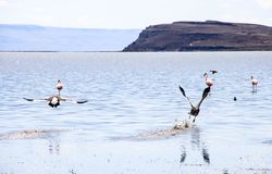 Lac en EL Calafate, Patagonia, Argentine Photo stock