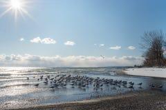 Lac en hiver avec le troupeau des mouettes sur le premier plan Soleil du côté gauche Images libres de droits