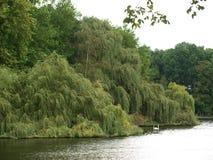Lac en parc Photographie stock