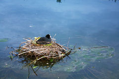 Lac en Suisse photos stock