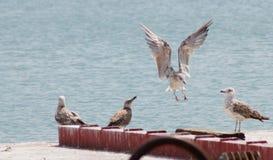 Lac en Toscane Photographie stock libre de droits