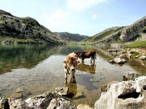 Lac Enol Photo libre de droits