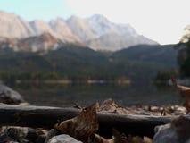 Lac et Alpes image stock