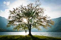 Lac et arbre Images stock