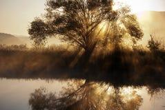 Lac et arbre Images libres de droits