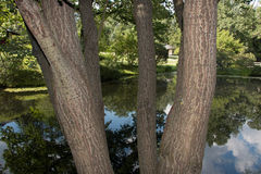Lac et arbre Photos libres de droits