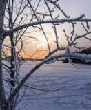 Lac et arbre congelés Photos libres de droits