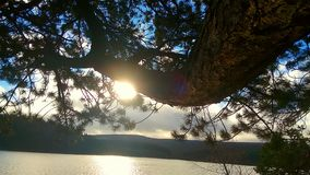 Lac et arbre sunlight Photo stock