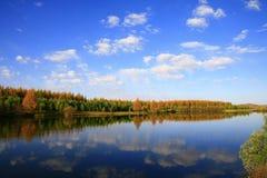 Lac et arbres Photos libres de droits