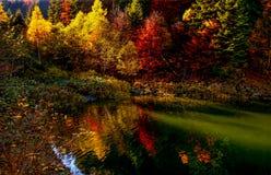 Lac et arbres autumn Images libres de droits