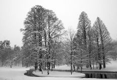 Lac et arbres en hiver photographie stock libre de droits