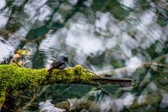 Lac et arbres en vallée de Jiuzhaigou, Sichuan, Chine Image stock