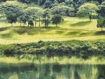 Lac et arbres illustration de vecteur