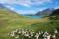 Lac et chèvres photographie stock libre de droits
