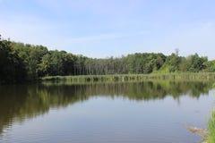 Lac et forêt Image libre de droits