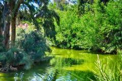 Lac et forêt Images libres de droits