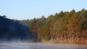 Lac et forêt de pin image libre de droits