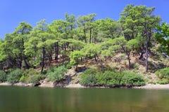 Lac et forêt de pin Photographie stock libre de droits