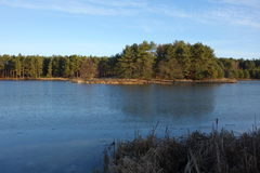 Lac et forêt glacials Photo stock