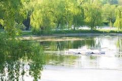 Lac et nature Photo stock