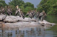 Lac et oiseaux Photographie stock libre de droits