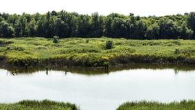 Lac et pré Image libre de droits