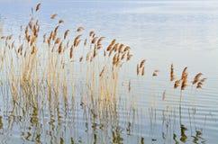 Lac et roseau Photos stock