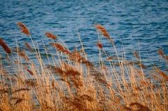 Lac et roseau photos libres de droits