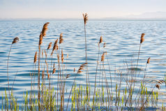 Lac et roseau Image stock