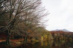 Lac et tresse en Autumn Forest image stock