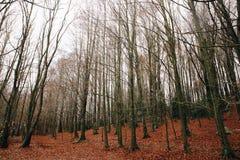 Lac et tresse en Autumn Forest photographie stock