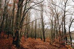 Lac et tresse en Autumn Forest photos libres de droits