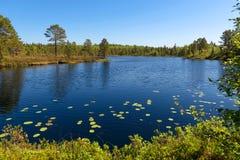 Lac et végétation forest sur l'île d'Anzersky photo libre de droits