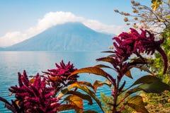 Lac, fleurs et volcan au Guatemala Images stock