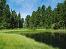 Lac forest photo stock
