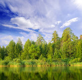 Lac forest photographie stock libre de droits