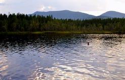 Lac forest en été Image libre de droits