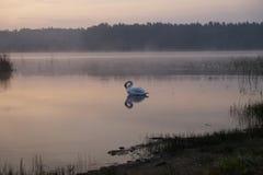 Lac forest sur le lever de soleil Été Cygne brouillard image stock