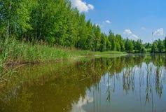 Lac forest un jour clair d'été Photos stock