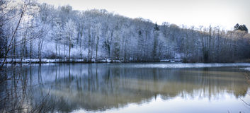 lac forrest blanc d'hiver photo stock