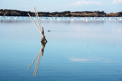 Lac Fusaro dans les campos Flegrei, Naples Photo stock