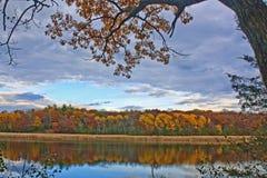 Lac grass dans l'automne Image libre de droits