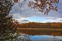 Lac grass dans l'automne Images stock