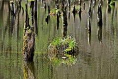 Lac Hubertlaki en Hongrie Image libre de droits