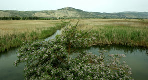 Lac Hulea, Galillee, Israël image stock