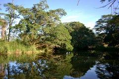 Lac i rzeka Obraz Royalty Free