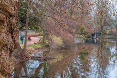 Lac ibis en hiver photo stock