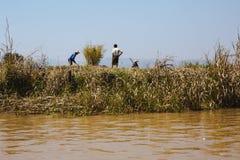 Lac Inle, Myanmar - 25 février 2014 : Travail de personnes d'Intha sur le flottement Photos stock